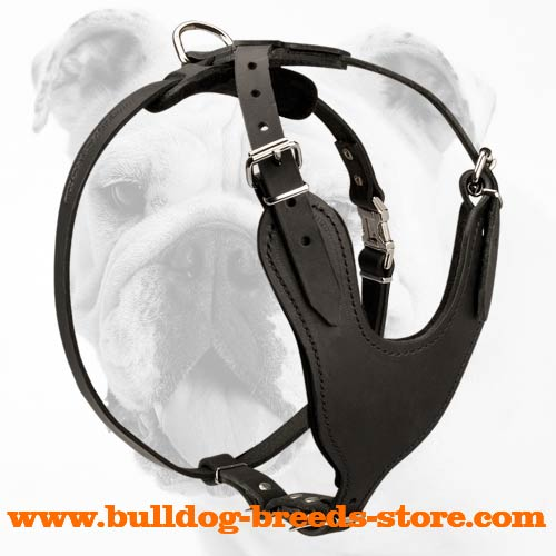 Agitation Training Leather Bulldog Harness with Padded Chest Plate