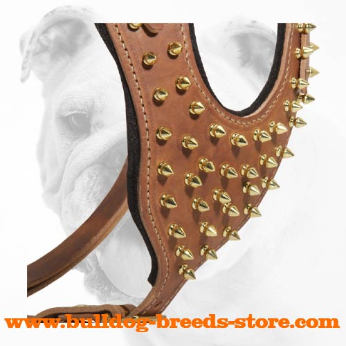 Brass Spiked Leather Bulldog Harness for Training