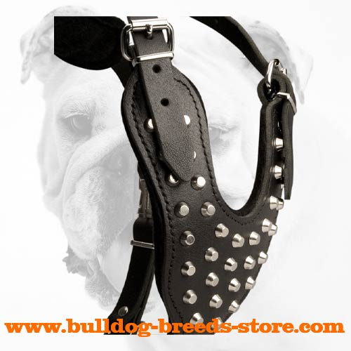 Stylish Walking Bulldog Leather Harness with Pyramids