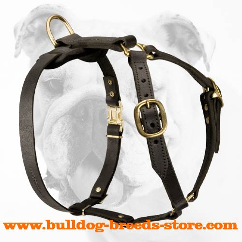 Comfortable Leather Bulldog Harness for Tracking