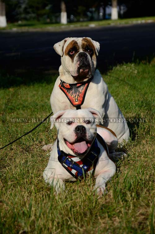 Fashion Leather Dog Harness for Bulldog with Beautiful Painting