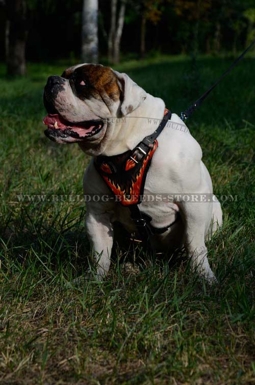 Training Designer Leather Dog Harness for Bulldog