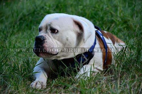 Walking Leather Dog Harness for Bulldog with American Flag Painting