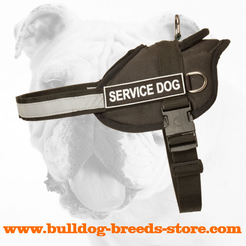 Everyday Training Nylon Bulldog Harness with Patches