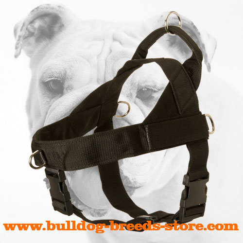 Training Nylon Bulldog Harness with Wide Straps