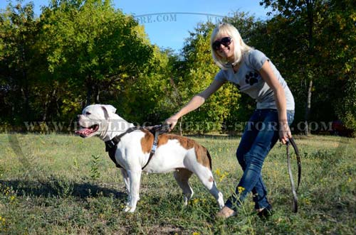 Walking Adjustable Leather American Bulldog Harness
