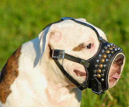 Leather Dog M-Hand Made Leather Muzzle for Alapaha Blood Bulldog