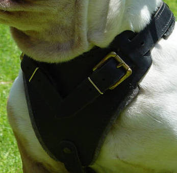 Australian Bulldog Control Dog Harness - H1