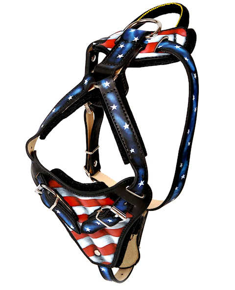 Best custom leather dog harness for American Bulldog  Terrier