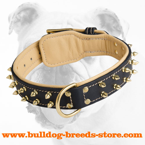 Designer Leather Bulldog Collar with Spikes for Walking