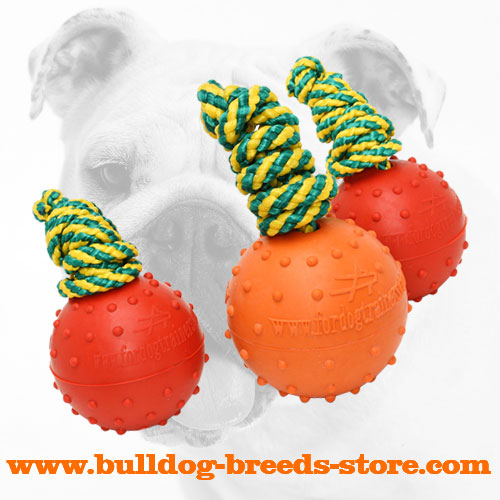 Rubber Bulldog Water Ball on a Strong String
