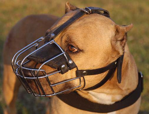 BullyPit Wire Dog Muzzle-Cage Dog Muzzle