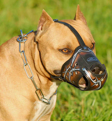 Best Leather Dog Muzzle for BullyPit