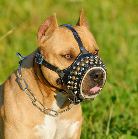 Leather Dog M-Hand Made Leather Muzzle for BullyPit