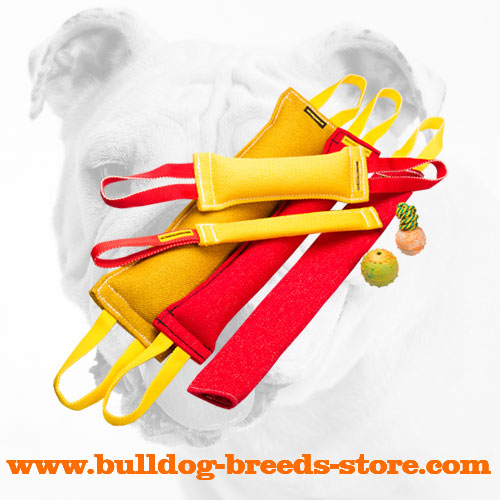 French Linen Bulldog Training Set
