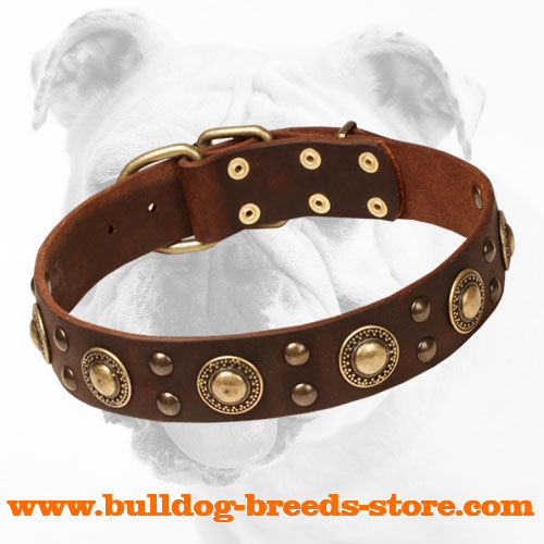 Leather Bulldog Collar with Trendy Brass Decorations
