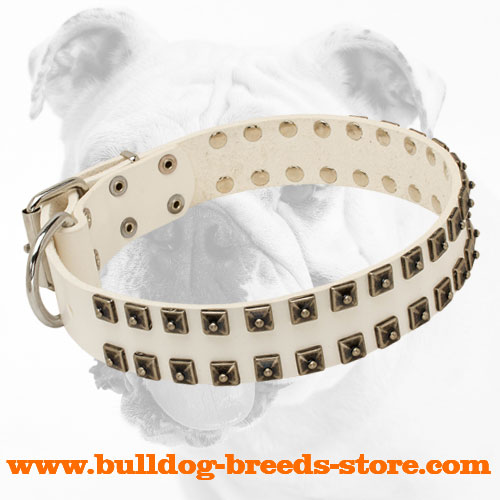 Adjustable White Leather Bulldog Collar with Old Nickel Studs