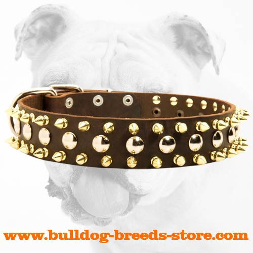 Practical Leather Bulldog Collar with Nickel Studs and Brass Spikes