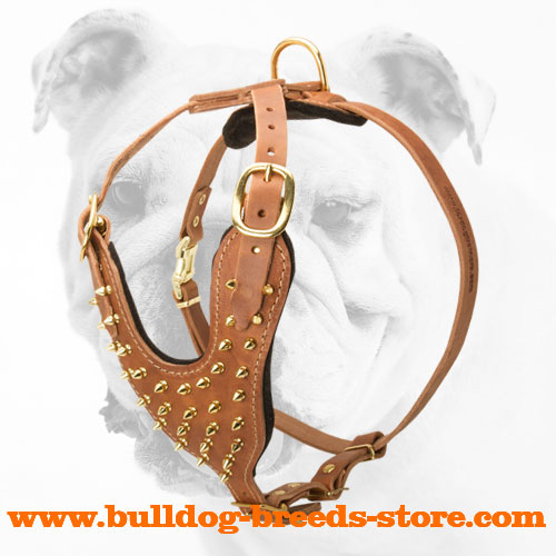 Deluxe Brass leather spiked dog harness-handmade spiked harness