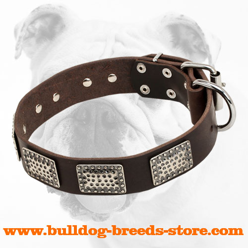 War Design Wide Leather Bulldog Collar with Nickel Plates
