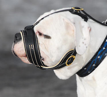 Alapaha Bulldog Royal Nappa Leather Anti Barking Muzzle