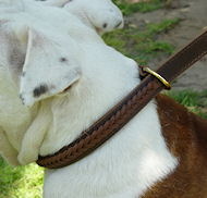 Gorgeous Wide 2 Ply Leather Choke Dog Collar - Fashion Exclusive