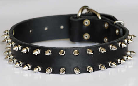 Spiked leather dog collar for Bulldog - 2   Rows of spikes