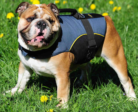 Dog Vest With Handle Vest   Dog Rehabilitation