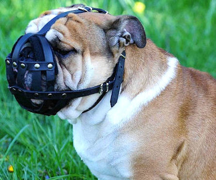 CustomLeather English Bulldog Muzzle