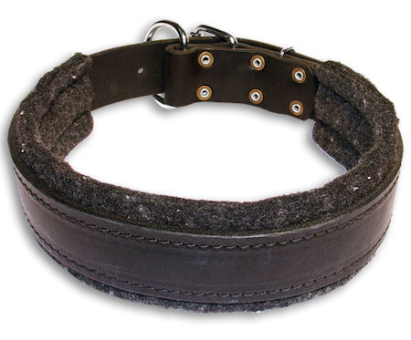 Leather Padded Black collar 26'' for Bulldog /26 inch dog collar - C24