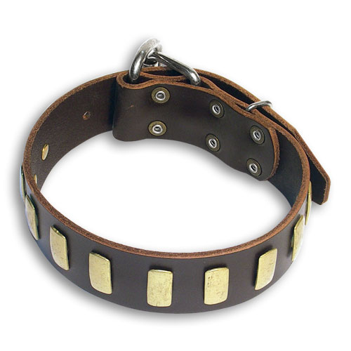 Walking Bulldog Brown dog collar 18 inch/18'' collar - S33p