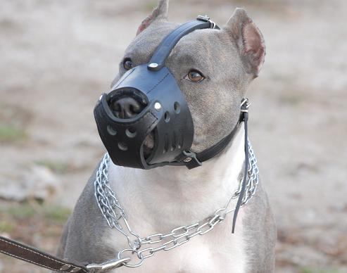 Safe Daily Walking Leather Muzzle