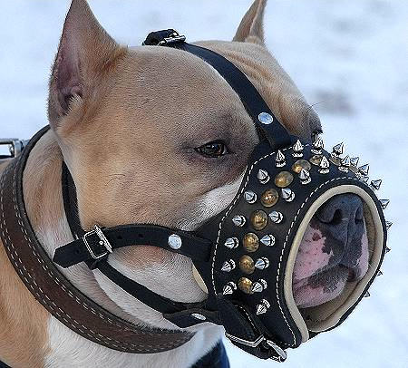 Royal Spiked Leather Dog Muzzle for American Bulldog Terrier