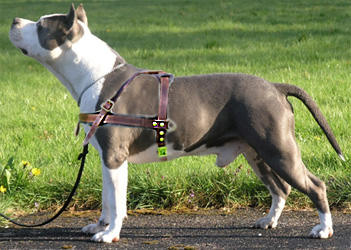 Dog Training Collars For Pitbulls