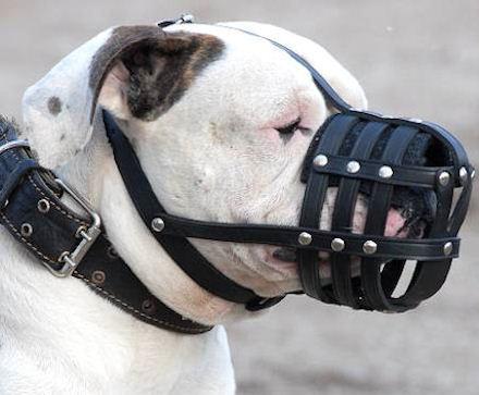 Everyday Durable Leather Dog Muzzle for Valley Bulldog