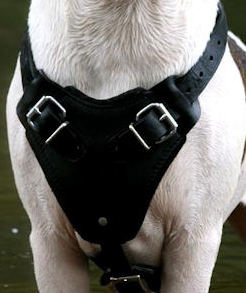 Victorian BULLDOG Harness,Leather dog harness,Padded Harness