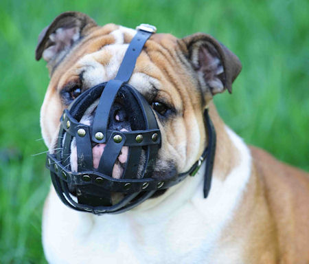 leather-dog-muzzle-for-bulldogs