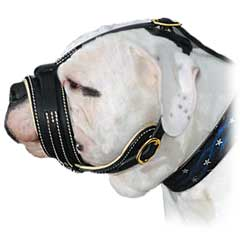 Strong Adjustable Leather American Bulldog Muzzle