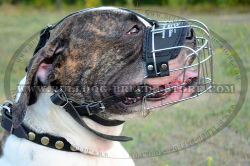 American Bulldog Wire Cage Muzzle for Training