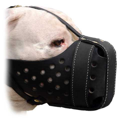 Adjustable Leather Bulldog Muzzle for Walking