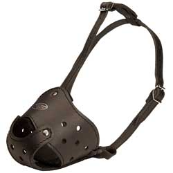 Let your Bulldog feel comfortable when muzzled