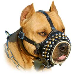Leather Bulldog Muzzle with Hand-Set Studs