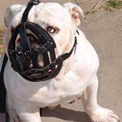 Adjustable Training Leather Bulldog Basket Muzzle