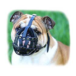 Comfortable Leather English Bulldog Muzzle