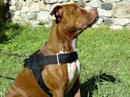 Nylon harness with handle for tracking,walking,training bullyPit
