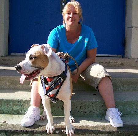 Best American Dog Harness For Amercian Bulldog  Terrier