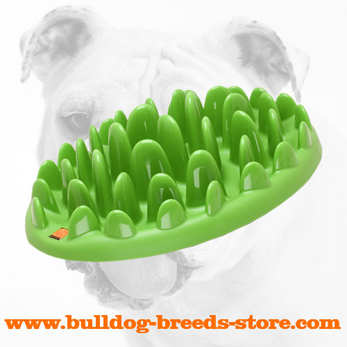 Interactive Safe Plastic Bulldog Feeder