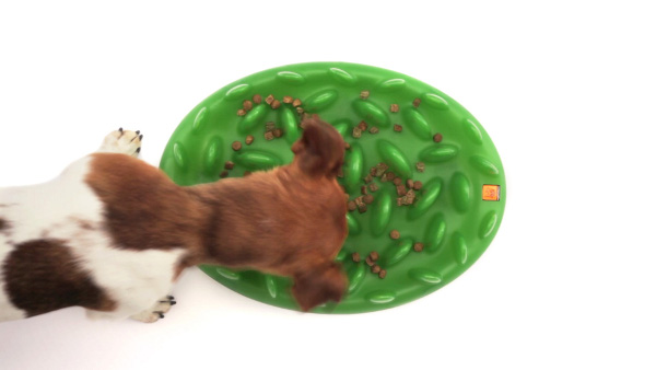 Firm Interactive Dog Feeder