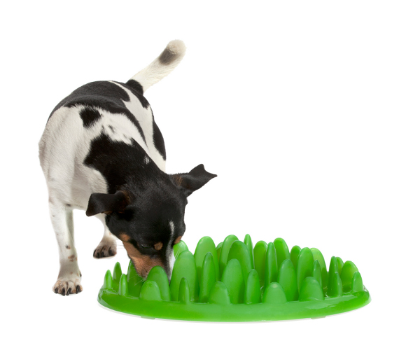 High-Grade Plastic Dog Feeder