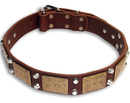leather-dog-collar-best-dog-collar